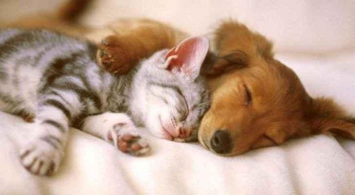 الكلاب والقطط تتصرف بشكل مختلف تماما على أساس سماتهم الوراثية