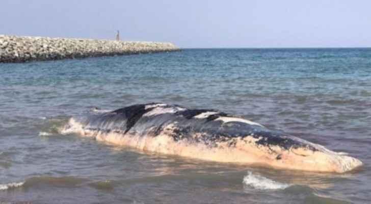 """حوت """"ضخم"""" قبالة سواحل الإمارات"""