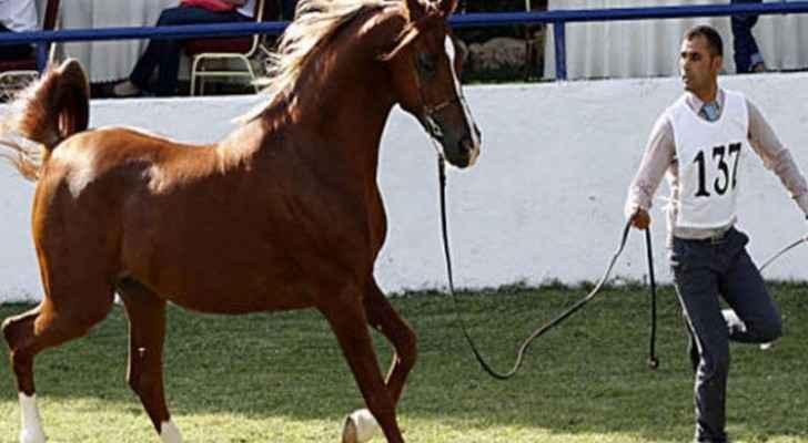 بطولة الشرق الاوسط للخيول العربية الاصيلة