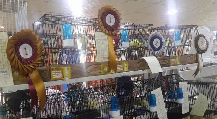 معرض ومسابقة لطيور الزينة في عمان