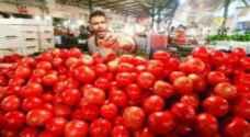 هبوط اسعار البندورة في السوق المركزي الى اقل من 70 فلسا للكيلو