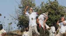 مستوطنون يعتدون على مزارعين في بيت لحم