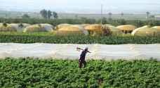 """""""الزراعة"""" تبحث مشكلات العمالة الزراعية وشركات البذور"""