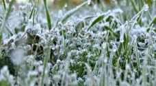 الزراعة تدعو لعدم زراعة المحاصيل الحساسة للصقيع