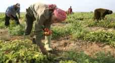 الفاخوري: رفع نسبة العمالة الأردنية في الزراعة الى 25 %