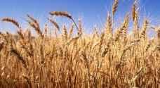 الأردن يشتري 50 ألف طن من القمح بسعر 204 دولارات