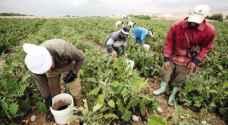 الزراعة تبحث تصدير الخضار لجمهوية التشيك