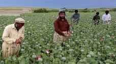 مسؤول أممي: 200 مليون دولار عائدات طالبان من تجارة المخدرات
