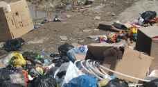بالصور.. شكاوى من انتشار الكلاب الضالة والنفايات بمخيم البقعة