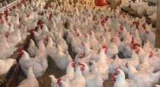 الغذاء والدواء تغلق مزرعة للدواجن في الكرك