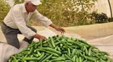 الزراعة تكشف أسباب ارتفاع سعر الخيار محليا