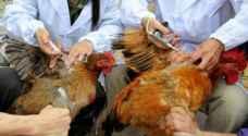 أمريكا تؤكد ظهور إنفلونزا الطيور في قطيع دجاج