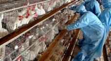 أمريكا تسجل إصابات بأنفلونزا الطيور في ولاية ويسكونسن
