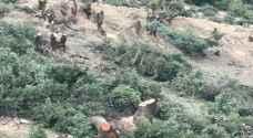 بالصور..قطع لأشجار البلوط في منطقة بدر الجديدة بعمان..والزراعة توضح