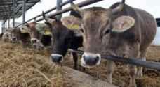 مسؤول برازيلي: تخطينا الأسوأ في قضية اللحوم الفاسدة
