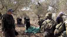 مستوطنون يقتلعون 310 شجرات زيتون في القدس المحتلة