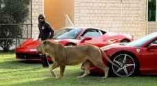 دبي تحظر بيع الحيوانات المفترسة