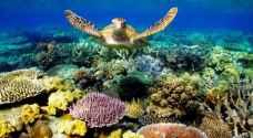 اليونسكو تدعو استراليا لفعل المزيد وحماية الحاجز المرجاني