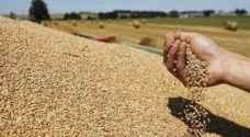 الحكومة ترفع سعر القمح والشعير