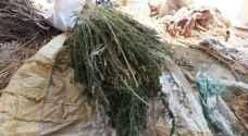 القبض على شخص زرع مواد مخدرة جنوب عمان..صور