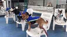 فيديو .. تايلاند تحول كلابها الضالة لحراس شوارع