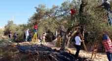 الخارجية الفلسطينية تدين اعتداءات المستوطنين على الزيتون وقاطفيه