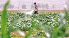 شروط جديدة لاستبدال العمالة الوافدة في القطاع الزراعي