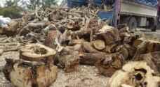 تحالف لحماية نحو ٣٠ ألف شجرة زيتون رومي بلواء الكورة