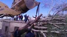 بالصور.. سقوط شجرة معمرة على منزل بالشونة الجنوبية