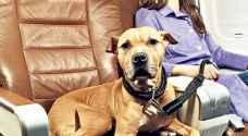 حسن سلوك الحيوانات الأليفة شرط لسفرها بأمريكا