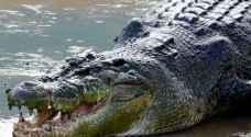 بالفيديو .. العثور على صياد مفقود داخل بطن تمساح في إندونيسيا