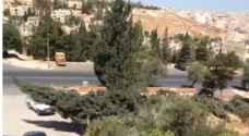 شكاوى من قطع أشجار معمرة في عمان – فيديو