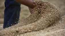 السعودية تشتري 1.74 مليون طن من الشعير