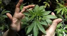 مزراعو الحشيشة في لبنان حذرون من تشريع زراعة نبتة تدر عليهم الأموال