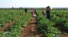 الحكومة تسمح للمزارعين بتلبية احتياجاتهم من العمالة الوافدة