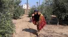 """البنك الدولي: الاقتصاد في غزة في حالة """"انهيار شديد"""""""