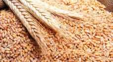 بدء بيع القمح والشعير بأسعار مدعومة للمزارعين الأحد