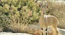 تحذيرات من انقراض نباتات وحيوانات في الأردن
