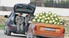 الأمانة تصادر 101 عربة و3634 صندوق خضار وفواكه