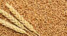 الحموري: مخزون المملكة من القمح يكفي الاستهلاك المحلي 12 شهرا