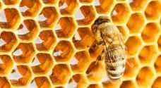 علماء يكشفون لأول مرة لغز الشكل السداسي لخلية النحل