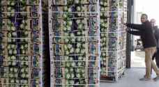 مصدرو الخضار والفواكه يتوقفون عن التصدير إلى كافة الأسواق الخارجية الثلاثاء