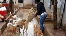 سورية تأوي آلاف الكلاب والقطط الضالة - صور