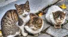 ما حقيقة تحذير الحكومة من قطط وكلاب الشوارع؟