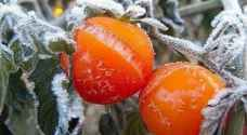 ما هو تأثير تشكل الصقيع على المزروعات في أواخر نيسان؟