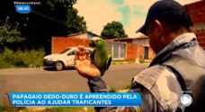 """البرازيل .. """"ماما شرطة"""" القبض على ببغاء يساعد عصابة تهريب مخدرات- فيديو"""