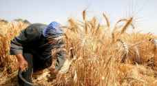 """""""الزراعة"""" تدعو لحصد محاصيل القمح والشعير تحسباً من احتراقها"""