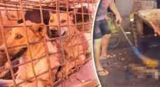 أردنيون غاضبون: أنقذوا القطط والكلاب من العمال الآسيويين
