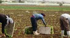 وزير العمل ينصح الأردنيين بالعمل في الزراعة
