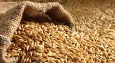 الزراعة تتسلم 22 ألف طن شعير و1239 طن قمح